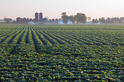 Soy Bean Field, Distant Farm Buildings Poster by Panoramic Images