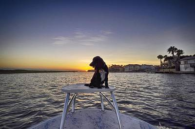 Spaniel At Sunset Poster