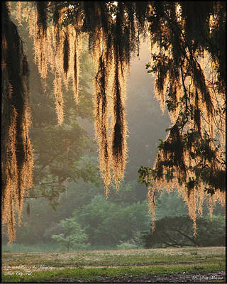 Spanish Moss In The Morning Poster by Robert Meanor