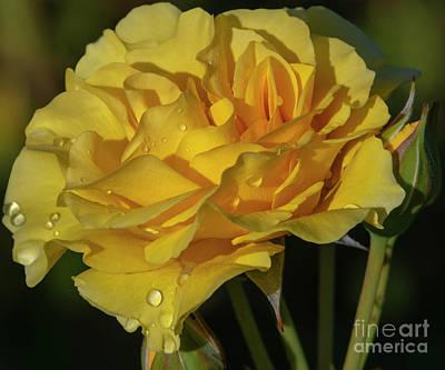 Sparkle N Shine Rose 7 Poster