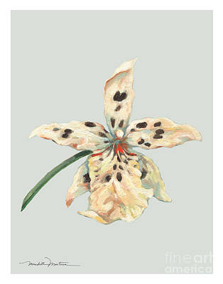 Speckled Orchid Poster by Meridith Martens