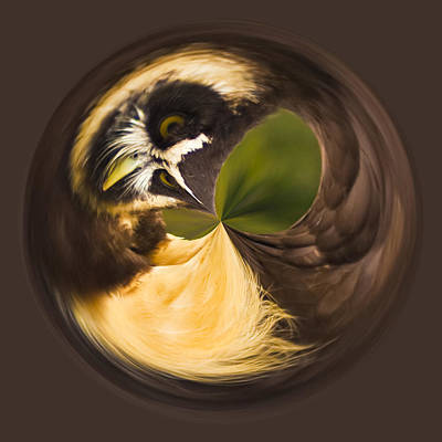 Poster featuring the photograph Spectacled Owl Orb by Bill Barber