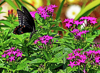 Spicebush Swallowtail Painted Poster by Judy Vincent