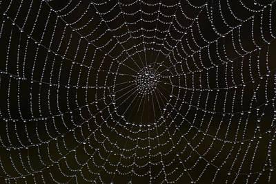 Spider Cobweb  Poster