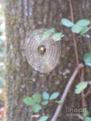 Poster featuring the photograph Spider In The Round by Marie Neder