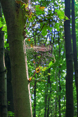 Spider Web In A Forest Poster