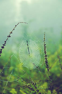Spider Web In Morning Dew Poster