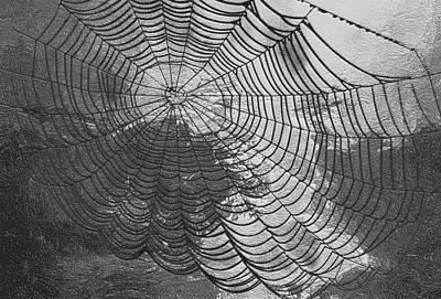 Spider Web Poster by Jack Zulli