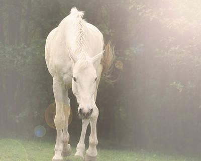 Spirit Horse...morning Glow Poster by Brent Davis