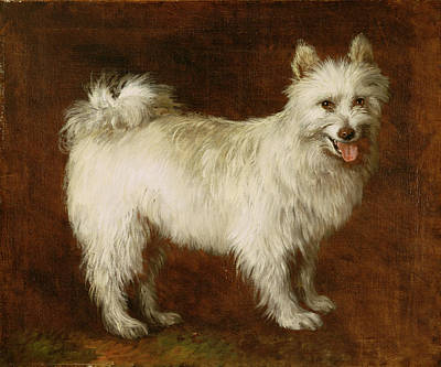 Spitz Dog Poster by Thomas Gainsborough