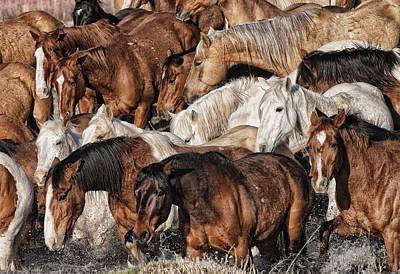 Splashing Horses Poster
