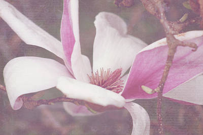 Poster featuring the photograph Splendid Tulip Tree  by Toni Hopper