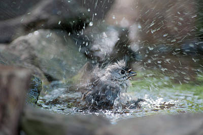 Splish Splash Poster by Dan Friend
