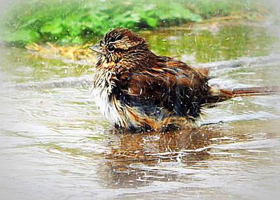 Splish Splash Poster by Karen Cook
