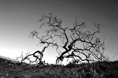Split Single Tree On Hillside - Black And White Poster