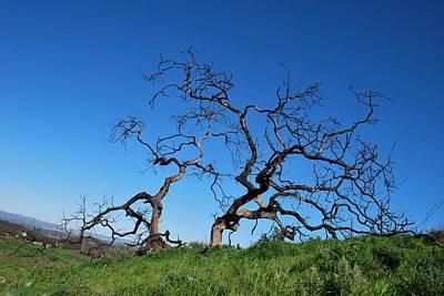 Split Single Tree On Hillside Poster