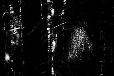Spotlight In The Woods Black And White Poster