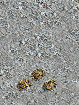 Spotted Frogs On Stone  Poster by Aimee L Maher Photography and Art Visit ALMGallerydotcom