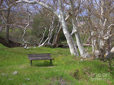 Spring Bench In Sycamore Grove Park Poster