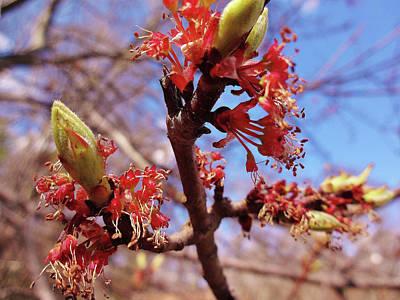 Spring Bloom #1 Poster