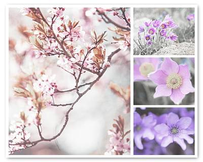 Poster featuring the photograph Spring Bloom Collage 1. Shabby Chic Collection by Jenny Rainbow
