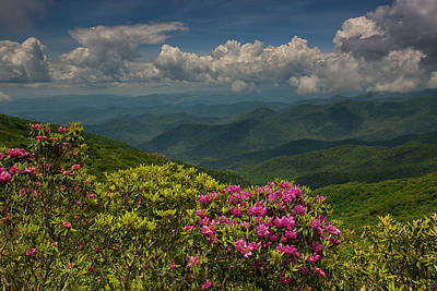 Spring Blooms On The Blue Ridge Parkway Poster