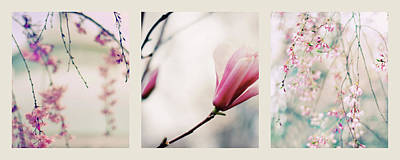 Poster featuring the photograph Spring Blossom Triptych by Jessica Jenney