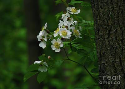 Spring Blossoms Poster by Deborah Johnson