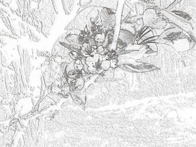 Spring Blossums Poster