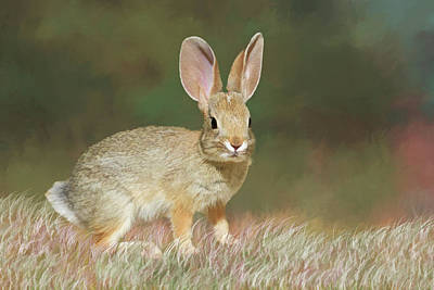 Spring Bunny Poster by Donna Kennedy
