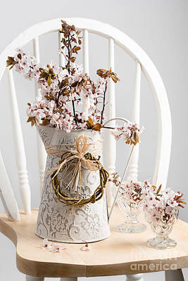 Spring Cherry Blossom On Chair Poster