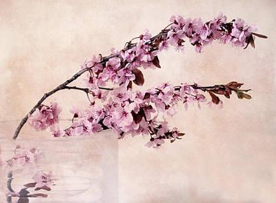Spring Cherry Poster by Jessica Jenney