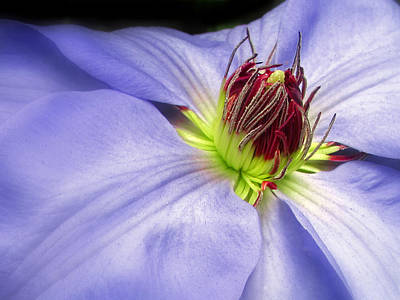 Spring Clematis Poster by Jessica Jenney
