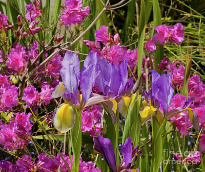 Spring Colour Poster by Terri Waters