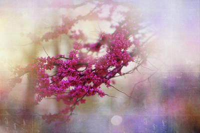 Poster featuring the photograph Spring Dreams II by Toni Hopper