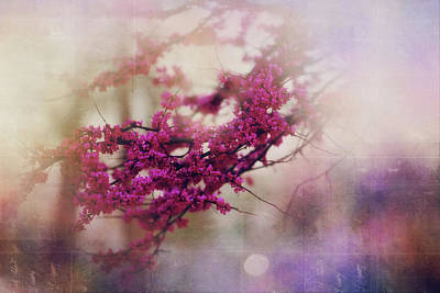 Poster featuring the photograph Spring Dreams IIi by Toni Hopper