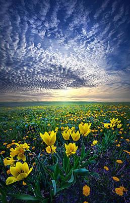 Spring Fever Poster by Phil Koch