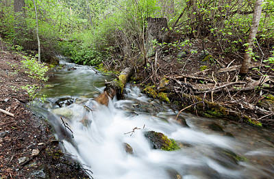 Poster featuring the photograph Spring Flow by Fran Riley