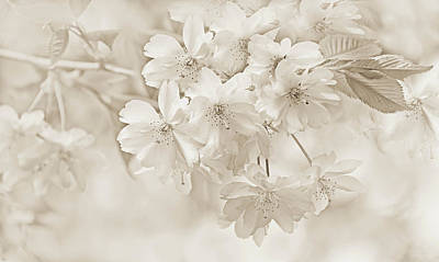 Poster featuring the photograph Spring Flower Blossoms Soft Brown by Jennie Marie Schell