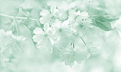 Poster featuring the photograph Spring Flower Blossoms Teal by Jennie Marie Schell