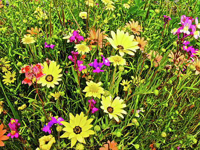 Spring Flowers Along California Highway 99 Poster