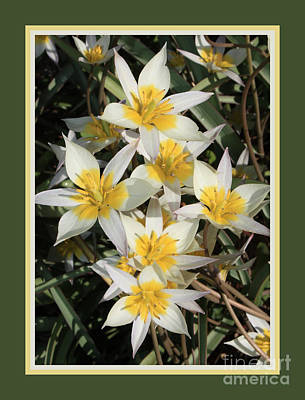 Spring Flowers With Green Border Poster by Carol Groenen
