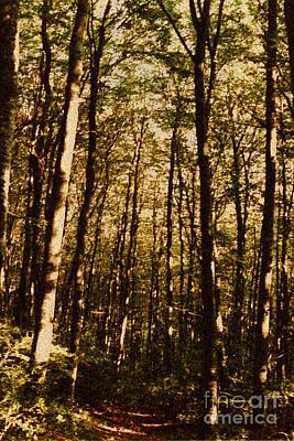 Poster featuring the photograph Spring Forest by Jean Bernard Roussilhe