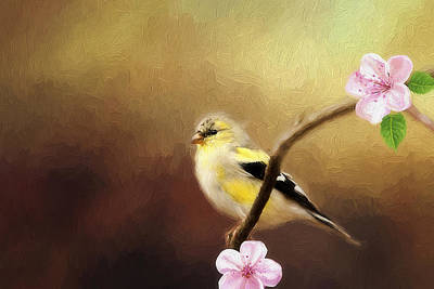 Spring Goldfinch Poster