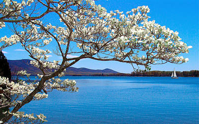 Spring Has Sprung Smith Mountain Lake Poster by The American Shutterbug Society