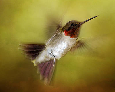 Spring Hummingbird Poster