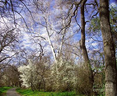 Spring In Bidwell Park Poster