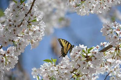 Spring Is Here 2 Poster by Tammy Hyatt