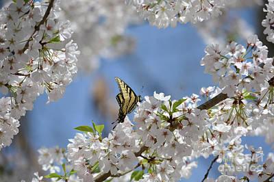 Spring Is Here 3 Poster by Tammy Hyatt