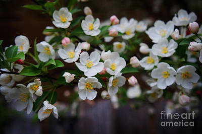 Spring Lanscape  Poster by Celestial Images
